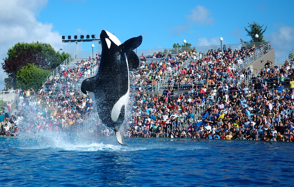 SeaWorld+Saving+Whales+Or+Reputation%3F