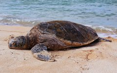 Navigation to Story: Save The Turtles